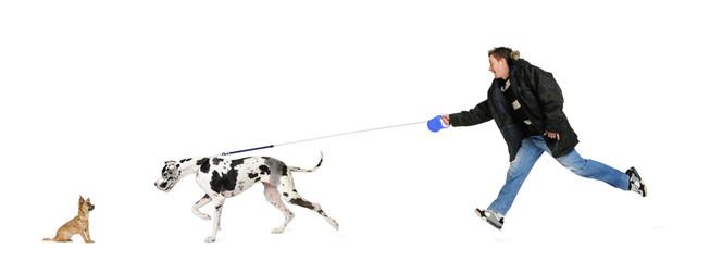 Man walking his dog (Great Dane 4 years)