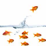 Fototapete Wasser spritzen - Goldfisch - Fische