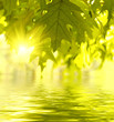 Leinwanddruck Bild - Green leaves reflecting in the water