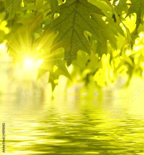 Leinwanddruck Bild Green leaves reflecting in the water