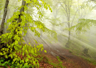 Mystic foggy forest landscape