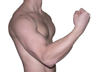 The bodybuilder-amateur