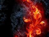 Fototapety Fiery flower
