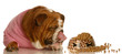 hungry  bulldog licking lips lying beside full dish of dog food