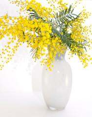 vaso di mimosa selvatica