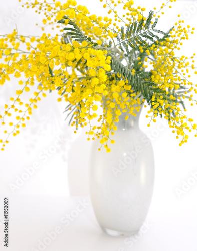 Quadro vaso di mimosa selvatica vendita online quadri e for Mimosa in vaso