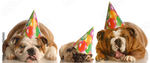 too much party - three dogs wearing birthday hats