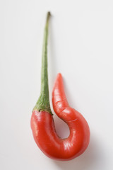 curled red chilli