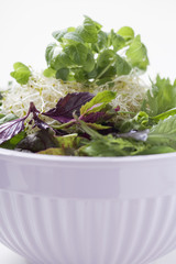 sprouts, herbs and salad leaves in bowl