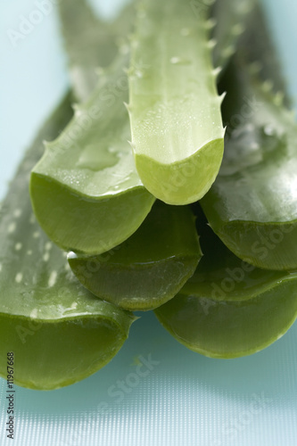 aloe vera (close-up)