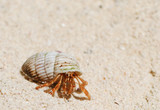 Hermit Crab on a beach poster