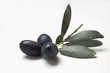olive sprig with black olives on white background