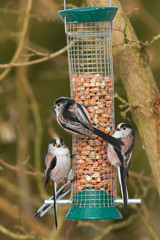 a birdfeeder full of long-tailed tits