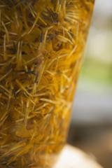 marigold petals in a glass (detail)