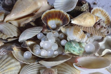 shell and pearl