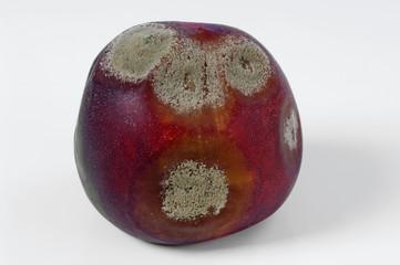 a mouldy peach