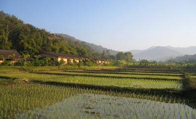 rizière thai