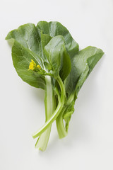 choi sum (chinese flowering cabbage) with flowers