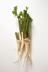 several hamburg parsley roots