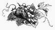 walnuts and grapes on vine leaf (illustration)
