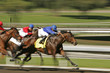 canvas print picture - Abstract Motion Blur Horse Race