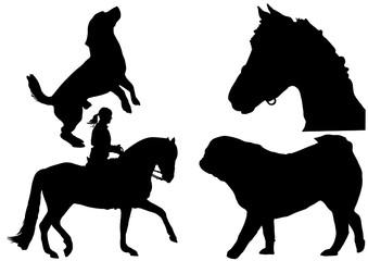 Pferde und Hunde