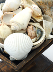 Nice assortment of seashells in an old wood dish.