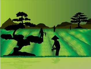 Rice field workers and Bonsai trees