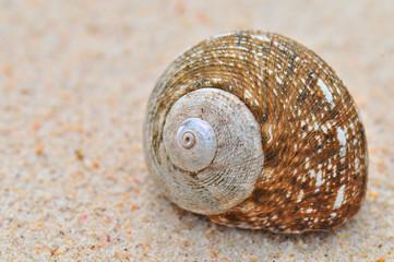 Snail shell on the Beach