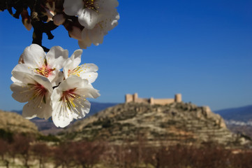 Almond flowers and spanish castle on background