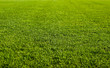 Green Grass Field - 12077088
