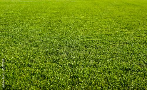 Green Grass Field - 12077088