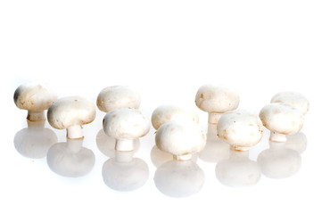 Fresh field mushrooms.