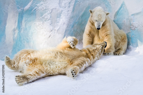 Fotobehang Ijsbeer Polar bears couple