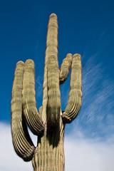 Saguaro against Sky and Clouds