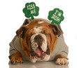 St. Patricks Day dog - funny Irish bulldog