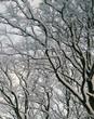 Neve sulla foresta