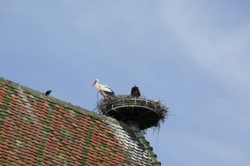 nido di cicogna