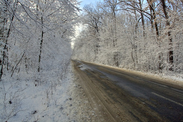 Country road in the winter