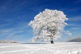 Fototapety Baum im Schnee