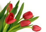 Fotoroleta Rote Tulpen