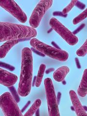 stäbchen bakterien