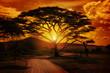 Fototapeten,afrika,abendsonne,safarie,serengeti