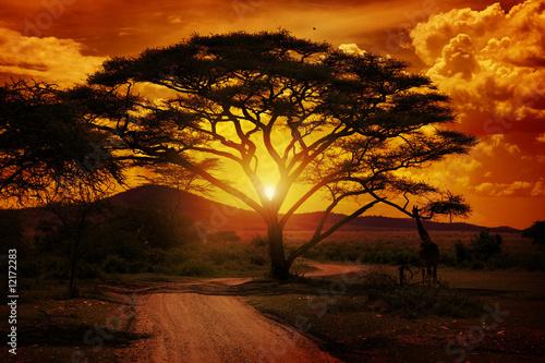 Fototapeten,afrika,sonnenuntergänge,saeule,serengeti
