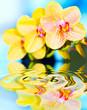 Leinwanddruck Bild - flower orchid.