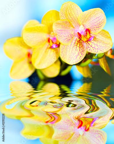 Leinwanddruck Bild flower orchid.