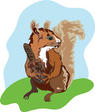 red squirrel eating vector