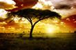 Quadro Africa Sunset