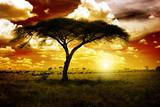 Fototapete Saeule - Serengeti - Naturlandschaft