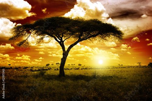 Fotobehang Overige Africa Sunset